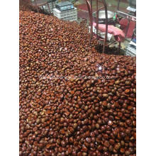 Nutritious big size fresh chestnut